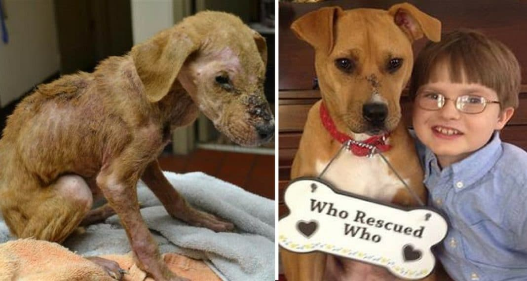 4-Month-Old Puppy Starved In Cage And Left For Dead, But Something Miraculous Was About To Happen
