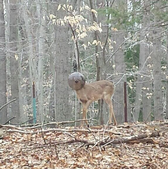 deer with globe on head