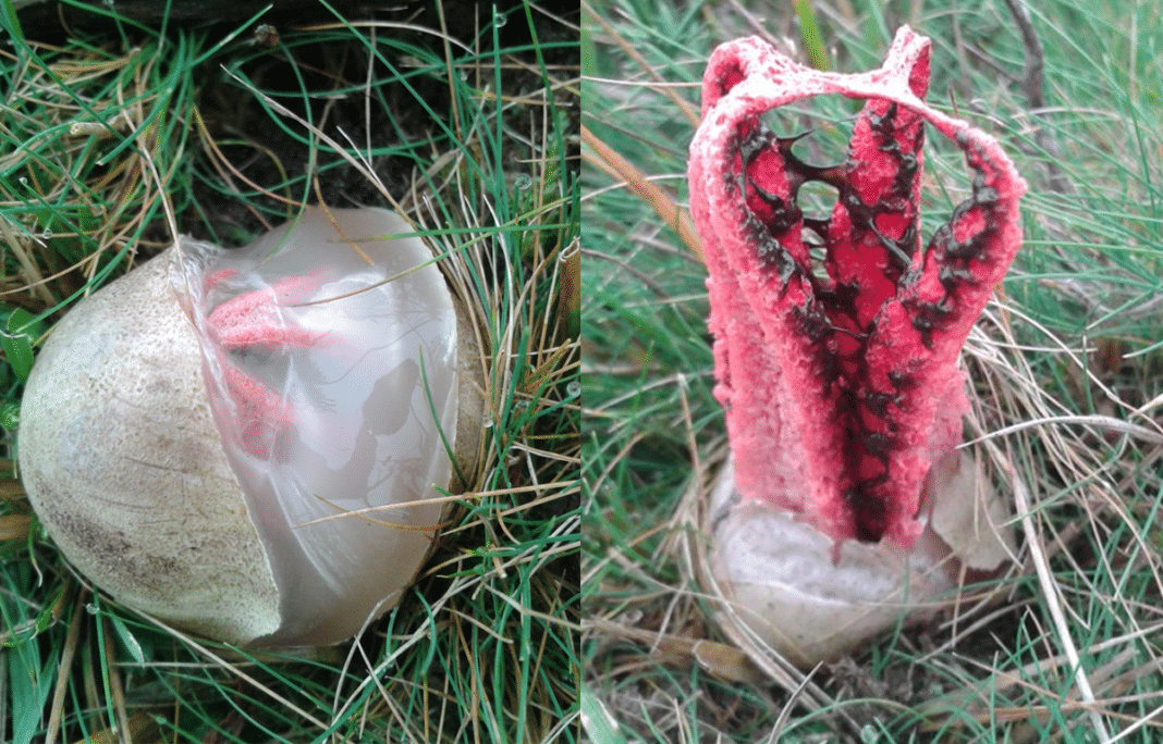 Man Spots Odd-Looking 'Egg' In Grass – But When It Hatches There Wasn't A Bird Inside