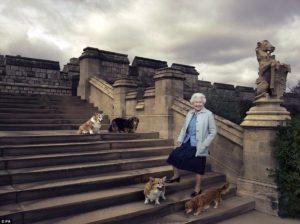 Queen Elizabeth with her dogs