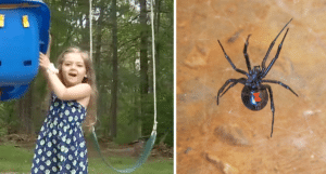 Kailyn Donovan and Black Widow spider