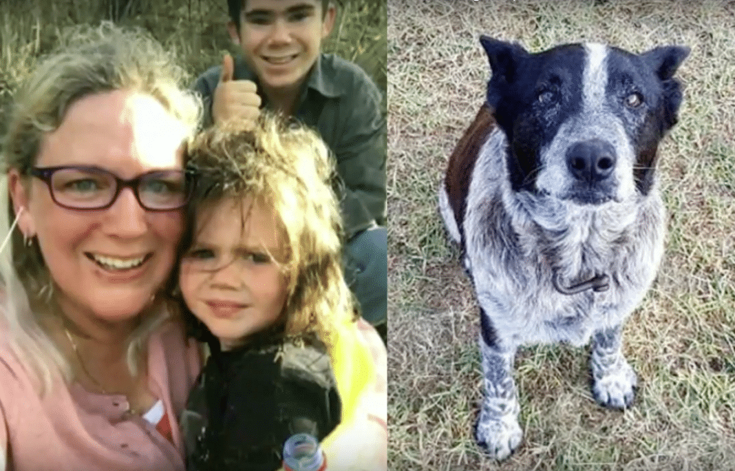 17-Year-Old Blind, Deaf Dog Leads Searchers To Lost 3-Year-Old Little Girl