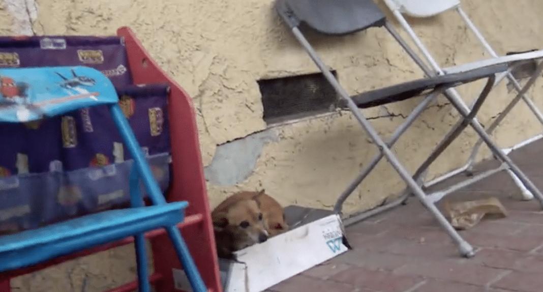 Abandoned Dog Living On Wet Cardboard Box For Weeks, Rescuer Picks Her Up & Realizes Her Secret