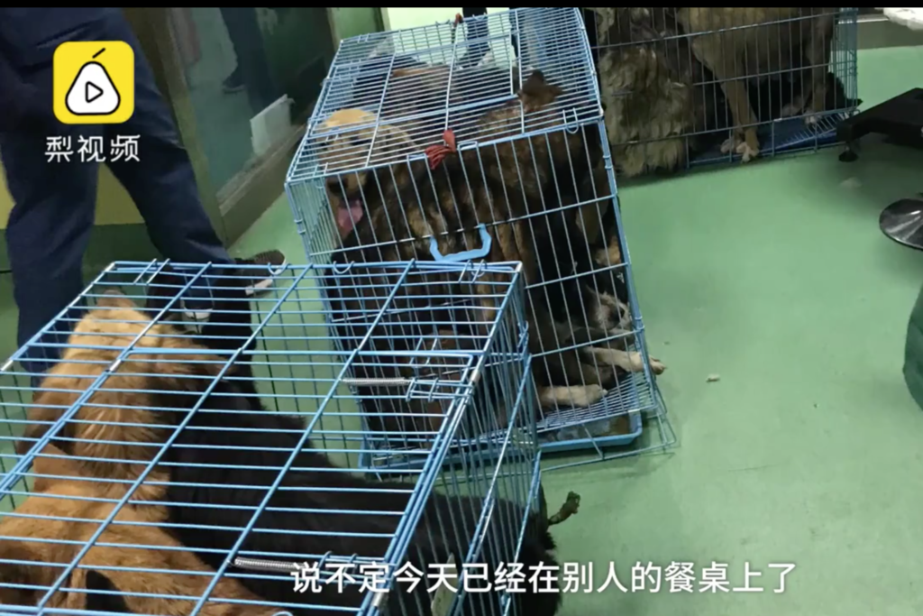 Dogs crammed into tiny cages later rescued by animal lovers