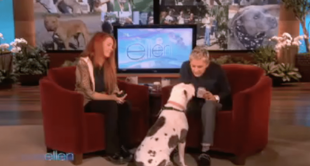 9-Yr-Old Rescue Pit Bull Goes On National TV, Has Ellen's Audience In Tears From Laughter