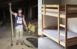 Bunk Bed and Carpet Python via Craig Baker/Facebook