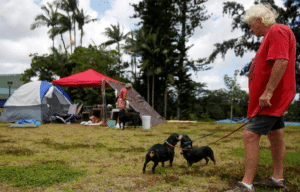 Hawaii rescued animals