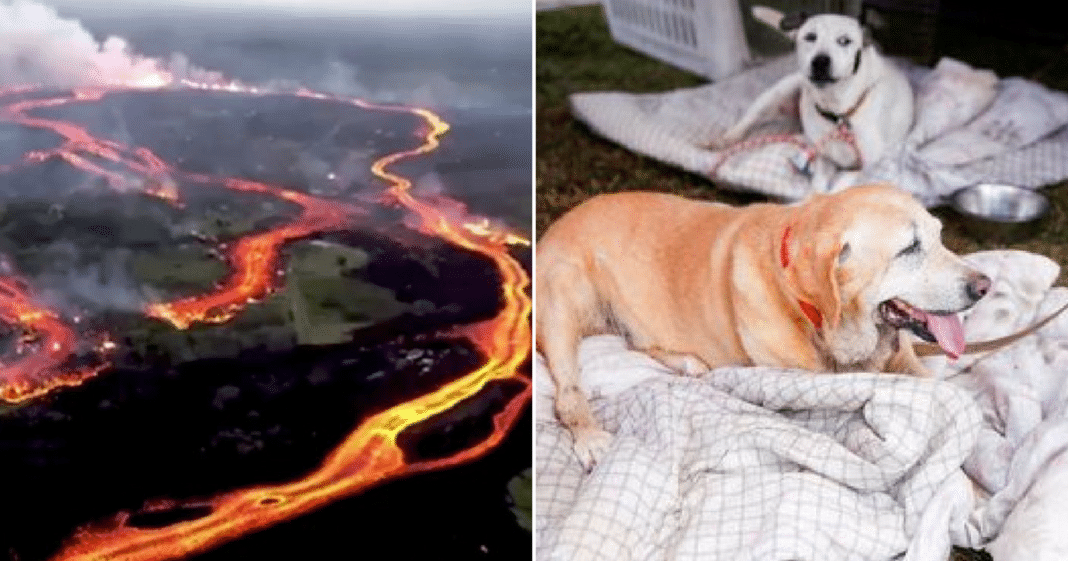 'Noah's Ark' Of Animals In Hawaii Left For Dead As Lava Surrounds – Rescuers Know To Act Fast