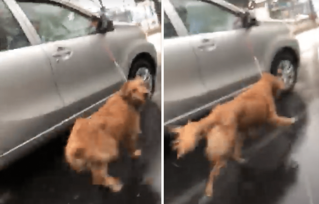 Driver Captures Horrifying Moment Dog Almost Run Over By Owners Dragging It From Car