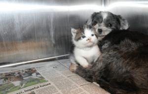 Cuddled up back at the shelter