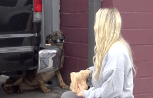 Rain the German Shepherd rescued by Hope For Paws