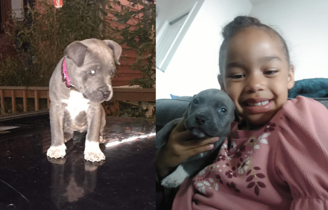 Man Steals Age 8 Girl's Puppy Right Out Of Her Arms While She Played In Front Yard Of Her Own Home
