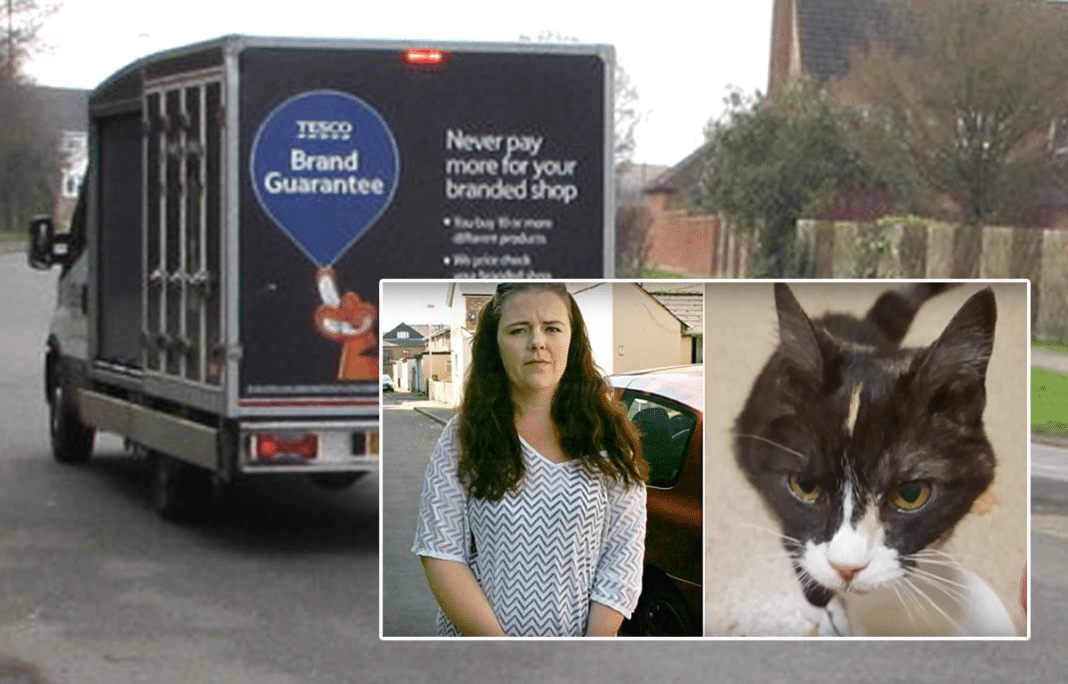 Family Devastated After Delivery Driver Runs Over Sleeping Age 18 Cat, Says 'I Thought It Was Roadkill'