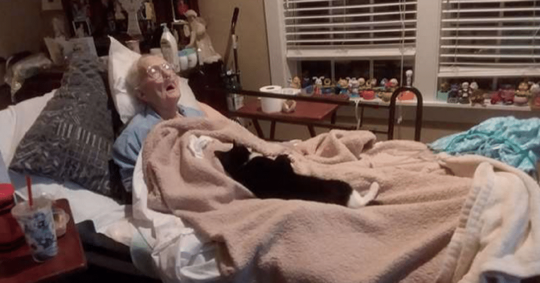Heartbroken Cat Refuses To Leave Bedside Of Dying Age 96 Grandma Who Raised Her