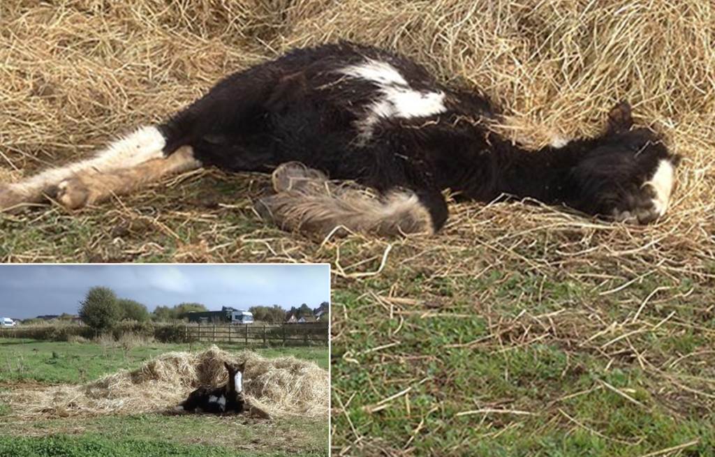 This is how rescuers found Frodo. He was hours from death.