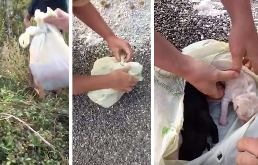 Woman Out For A Walk Finds Wriggling Trash Bag, Saves Three Crying Puppies Inside