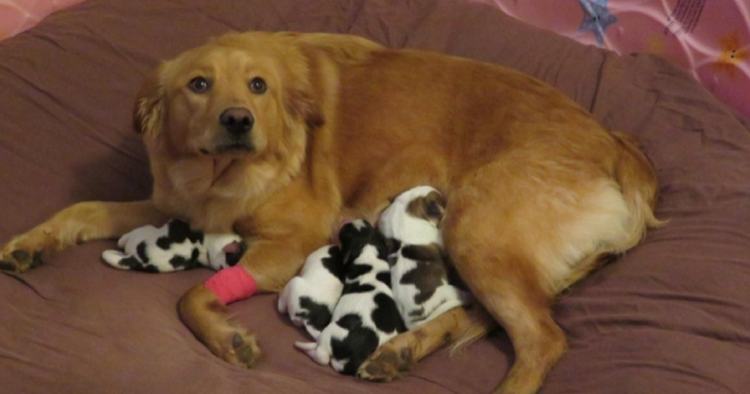 Pregnant Rescue Dog Gives Birth To A Litter Of Adorable 'Baby Cows'