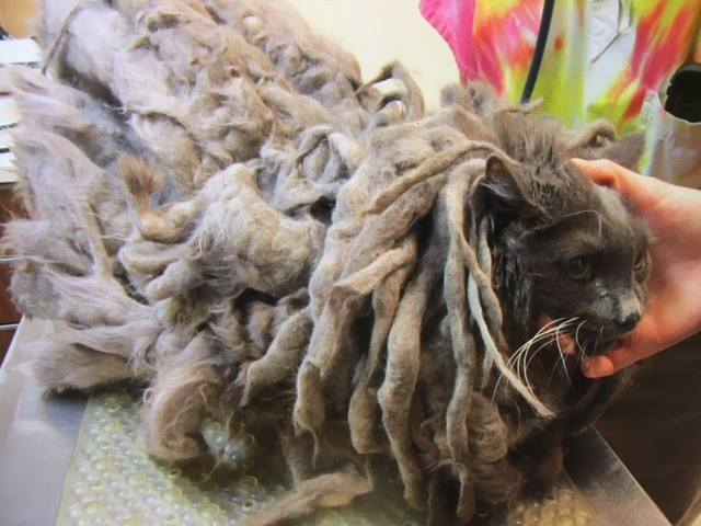 Bob Marley had extremely matted fur