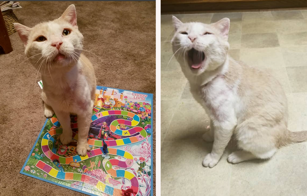 Battle Cat, after time in a loving and caring home