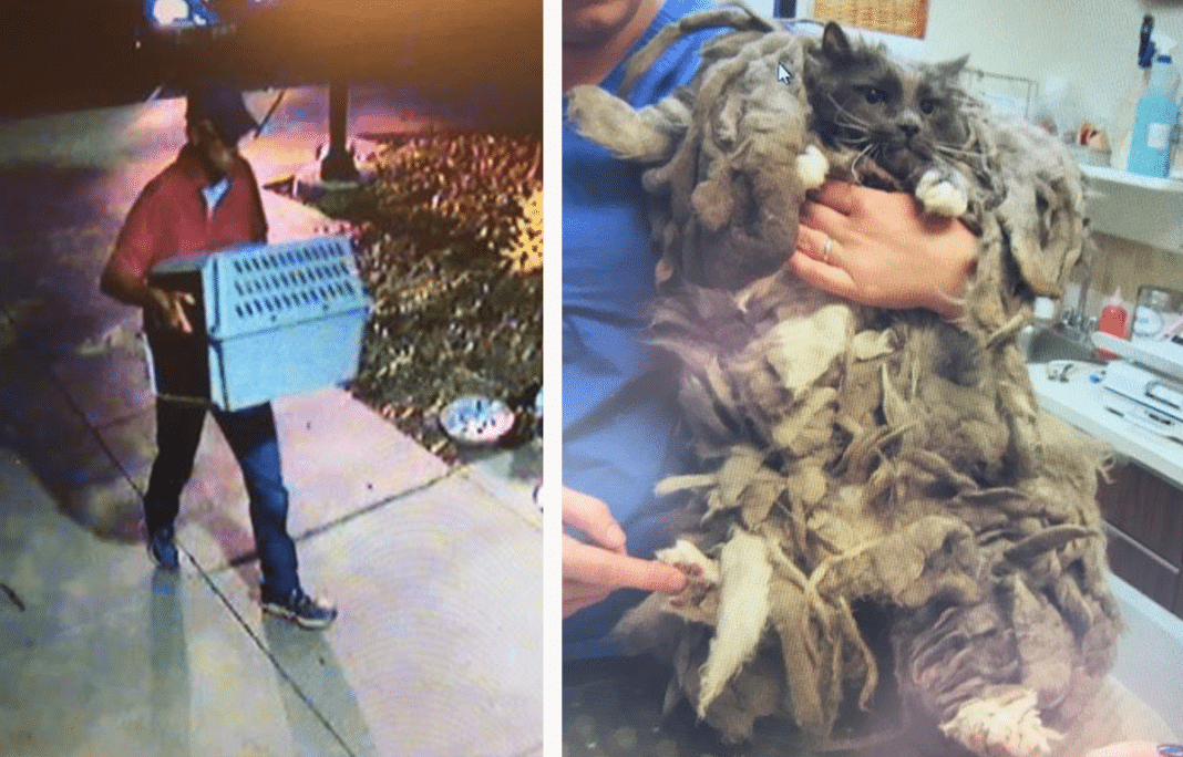 Man Abandons Crate At Shelter. Workers Find Animal Matted So Badly They Couldn't Tell What It Was