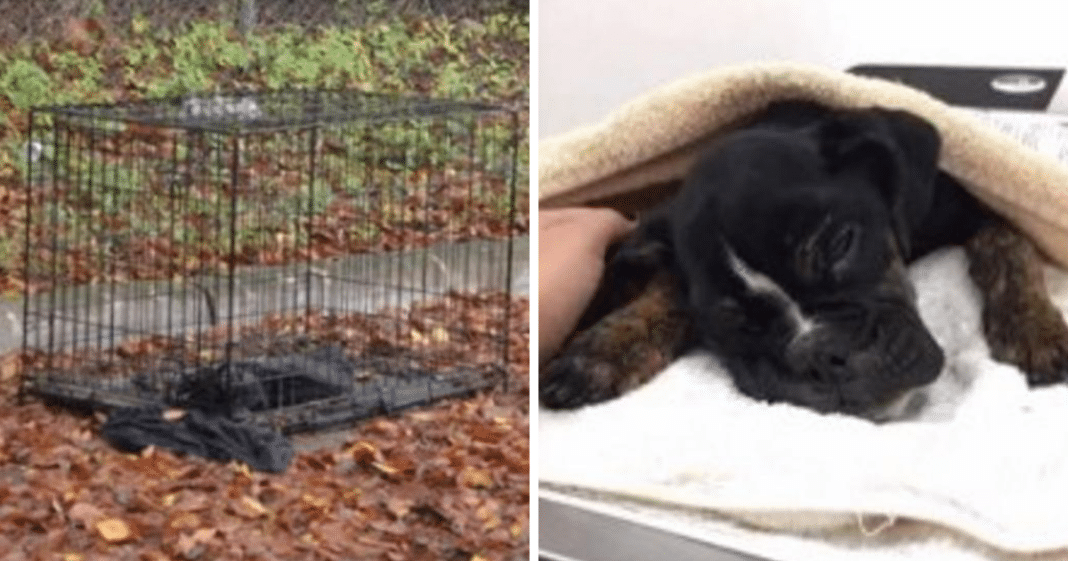 Police Get Call About Dead Dog Left In Crate. Cop Inspects The Body And Realizes Pup Is Still Alive
