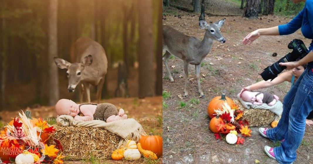 Photographer Captures Rare Moment Deer Magically Approaches Newborn's Photo Shoot