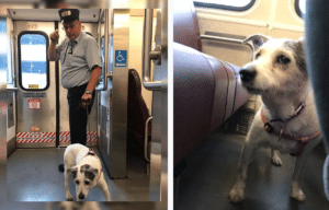 Howard Kempton, NJ Transit conductor, Shelby the dog