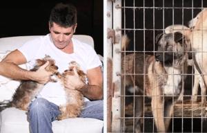 Simon Cowell, dog meat farms