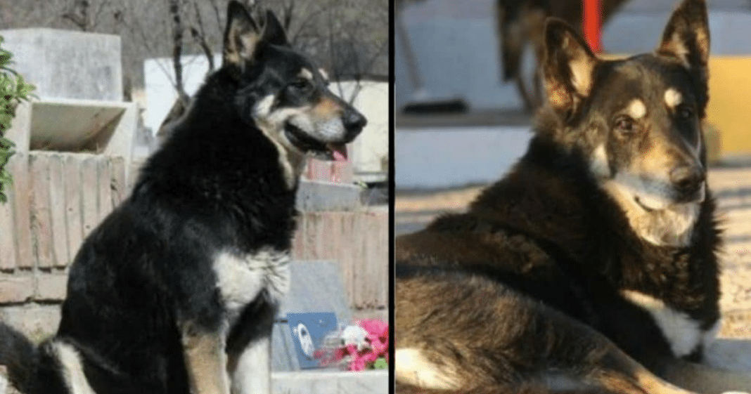 Loyal dog passes away after guarding his master's grave for 11 years