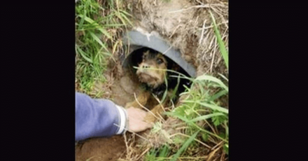 Couple Spots Abandoned Dog In Ditch, Look Closer And Realize Leg Is Hanging On By A Thread