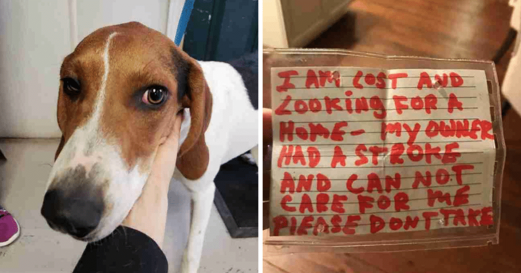 6-Month-Old Dog Found Wandering Streets Alone With Heartbreaking Note Stuck To Collar
