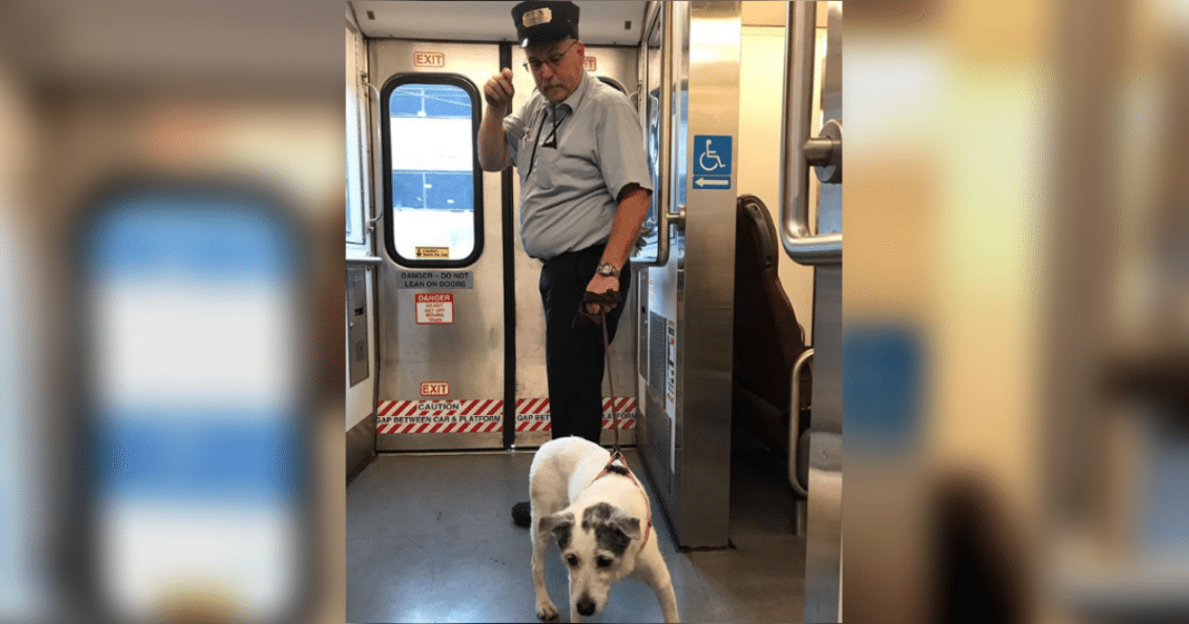 Transit Conductor Takes Matters Into Own Hands After Lost Dog Wanders Onto Busy Tracks