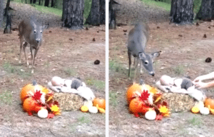 Imagine That Photography, deer approaches baby in photo-shoot.