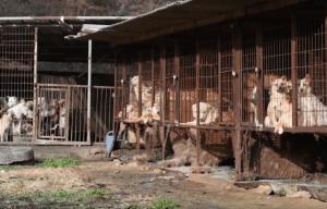 Dog meat farm in South Korea via YouTube