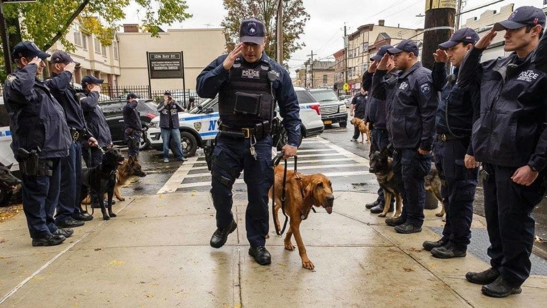 More Than 20 Cops Honor Brave Police Dog With Cancer Just Before She Was Put Down