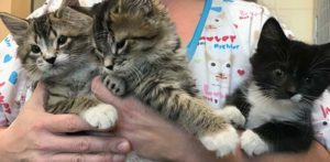 Marie, Berlioz, and Toulouse via MSPCA-Angell