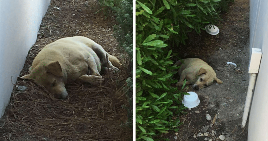 Abandoned dog found living in the dirt after cruel owners moved away and left him to die alone