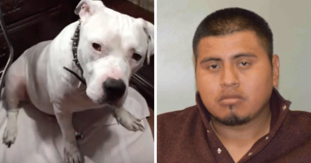 Family Dog Gives Its Life Saving His Owner After Boyfriend Assaults Her With A Knife