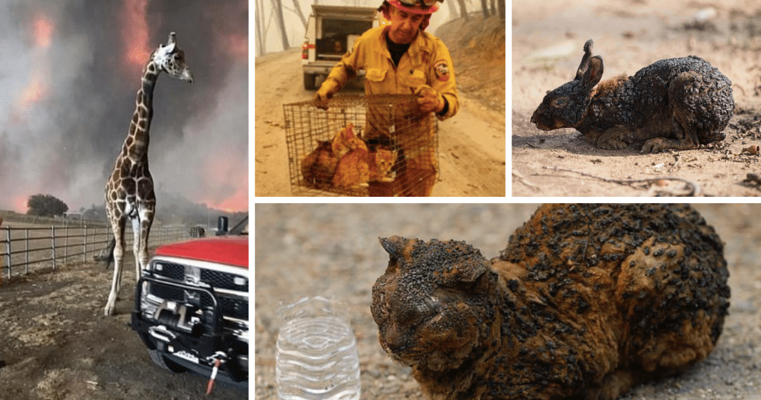 Heartbreaking Images Show Injured Animals Rescued From California Wildfires