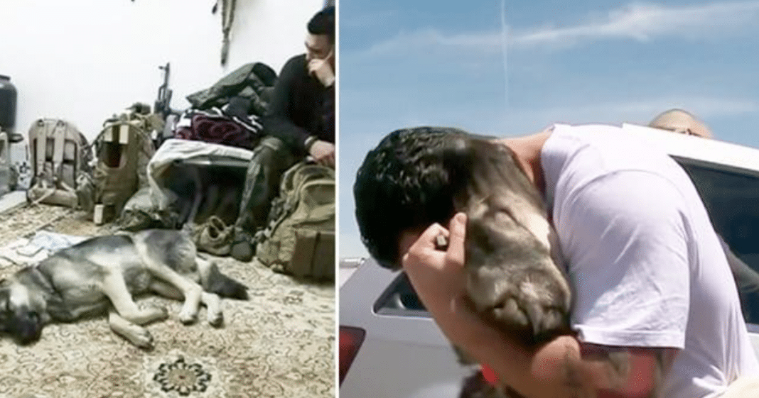 Army Soldier Falls In Love With Stray Dog In Iraq – 1 Month Later, Pup Loses It When They Meet Again
