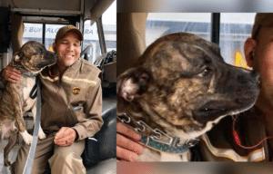 Ernie the pit bull with UPS driver, Jason Coronado