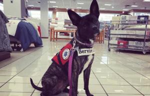 Service Dog, Polly, Laura Joos