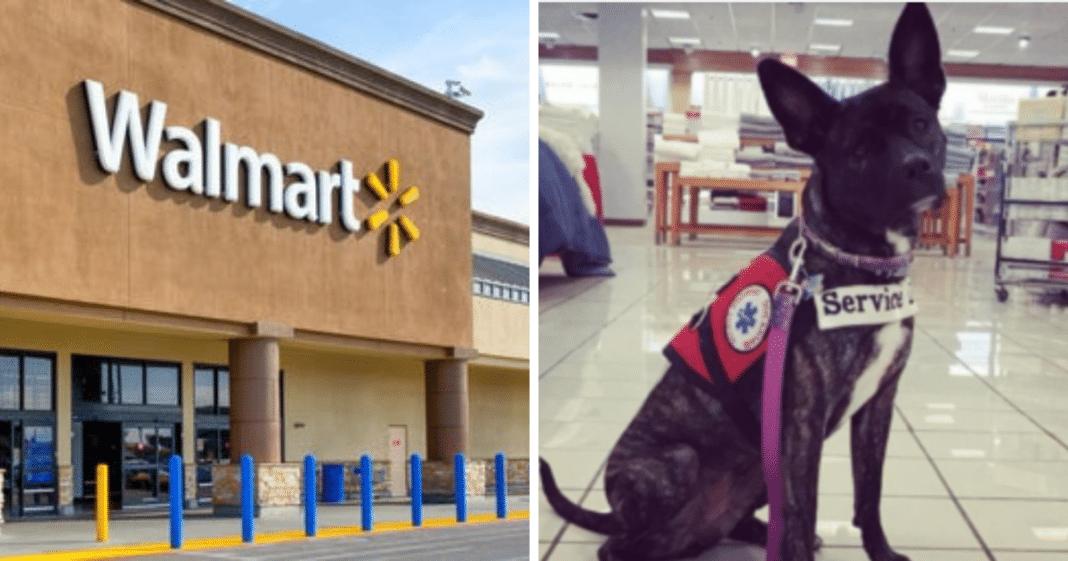 Woman upset when stranger's kid smacks service dog at Walmart, hits back with brutal response