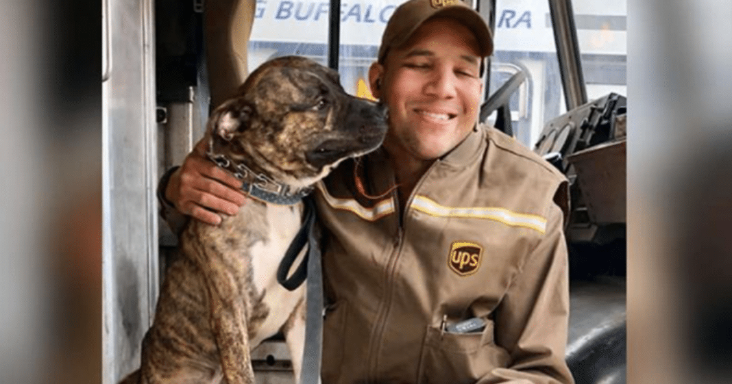 Stray Pit Bull Mix Hops Into UPS Driver's Truck And Won't Leave, So Driver Decides To Bring Him Home