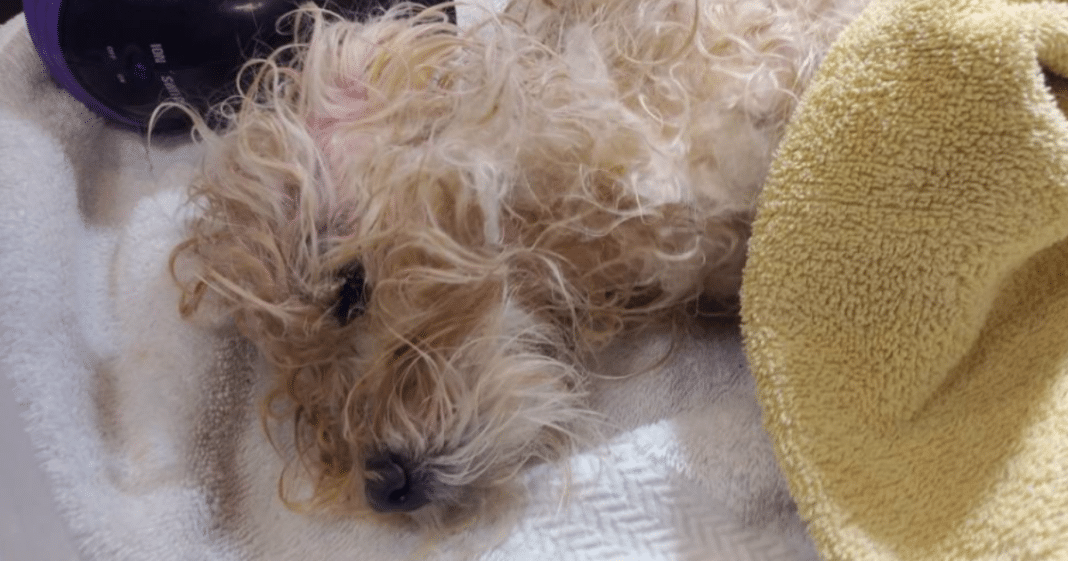 Tiny Whimpers Heard Coming From Dumpster, Dog Beaten Within Inch Of Its Life Found In Trash Bag