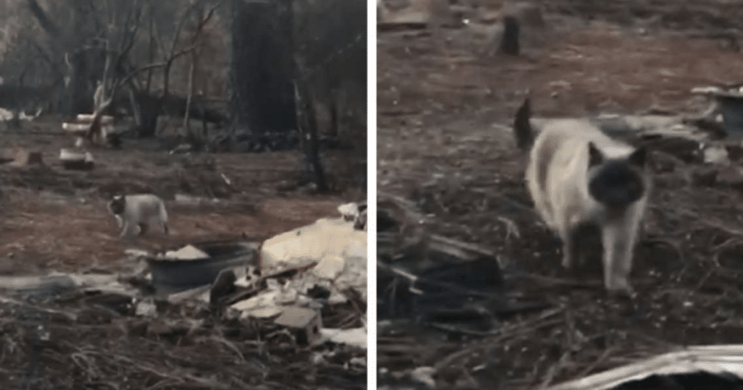 Beloved Cat Feared Dead 1 Month After Wildfire Comes Running When She Sees Her Family Again