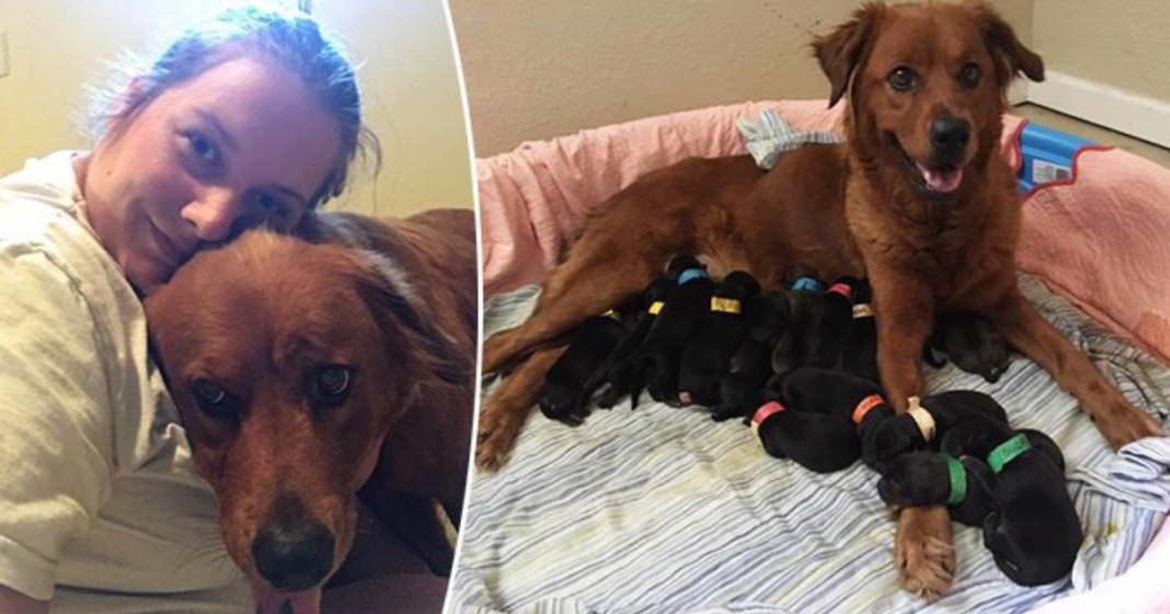 Pregnant Mama Dog Gives Birth To 18 Pups After Kind Stranger Saves Her From Euthanasia