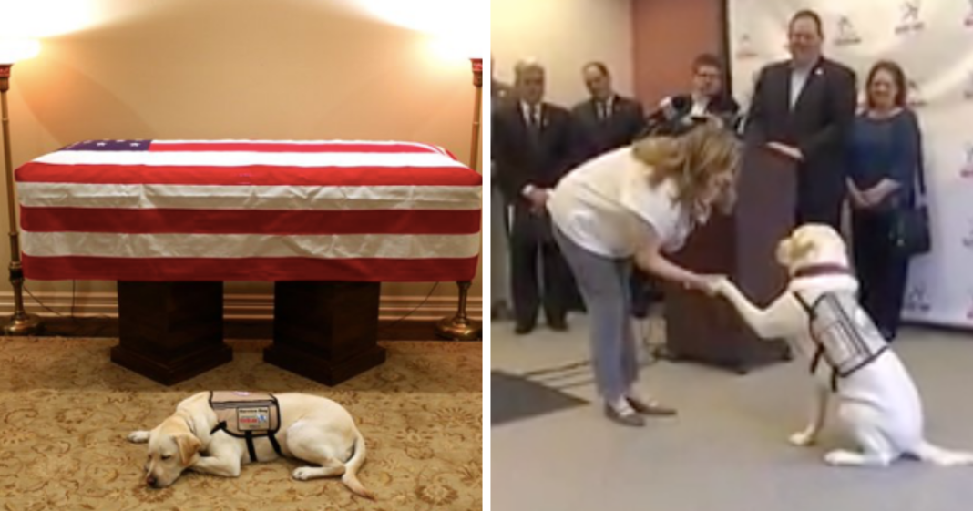 George H.W. Bush's Beloved Service Dog 'Sully' Gets A Hero's Welcome Before Next Mission