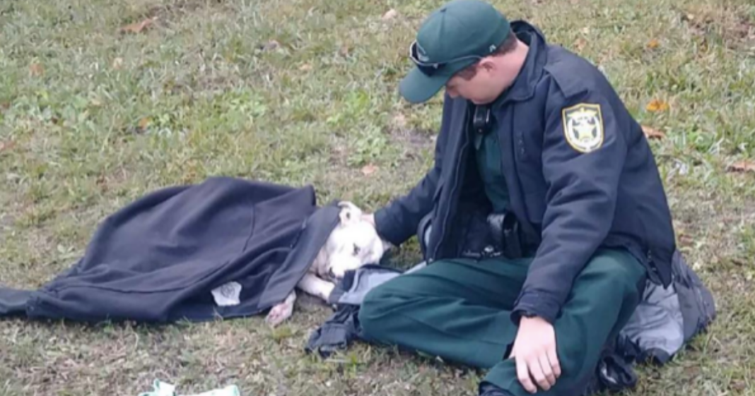 Dog's Best Friend: Cop Comforts Wounded Dog When She Needs It Most