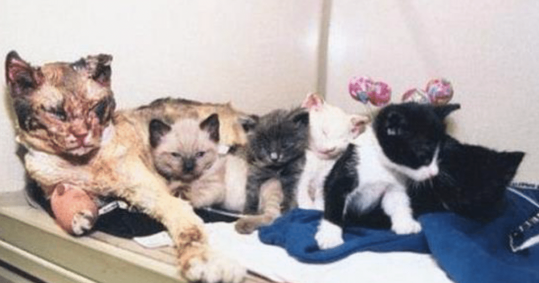Heroic Mama Cat Walked Through Fire To Rescue Her 5 Kittens From Certain Death
